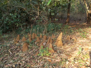 Termite mounds